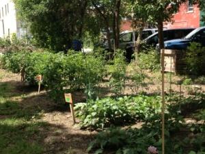 Carmichael Community Garden